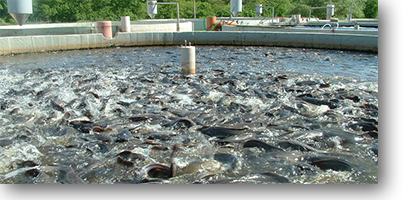 کاربرد ازن ژنراتور در استخر پرورش ماهی