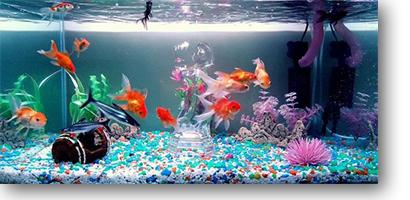 کاربرد ازن ژنراتور در پرورش ماهی های زینتی
